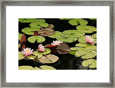 The Loveliness Of Waterlilies Framed Print by Byron Varvarigos