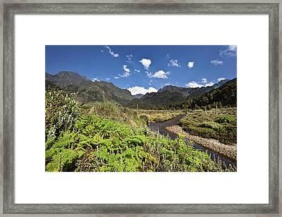 The Lower Bigo Bog With Giant Lobelia Framed Print by Martin Zwick