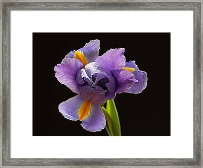 The Lucky One Framed Print by Juergen Roth