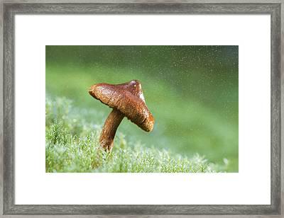 The Magic Umbrella Framed Print by Mircea Costina Photography