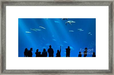 The Magnificent Open Sea Exhibit At The Monterey Bay Aquarium. Framed Print by Jamie Pham