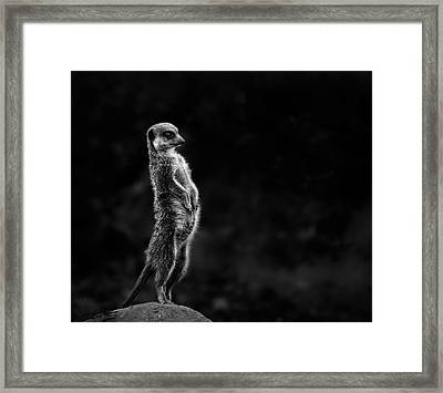 The Meerkat Framed Print by Greetje Van Son