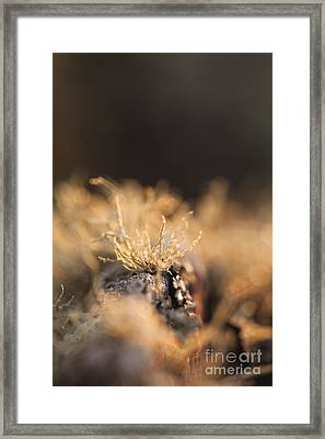The Miniature World Of Lichen Framed Print by Anne Gilbert