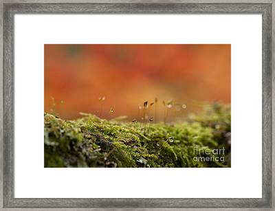 The Miniature World Of Moss  Framed Print by Anne Gilbert