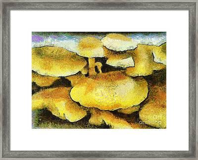 The Mushroom Family Framed Print by Odon Czintos
