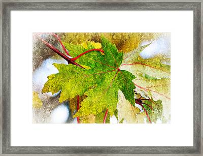The Mysterious Leaf Abstract Framed Print by Andee Design