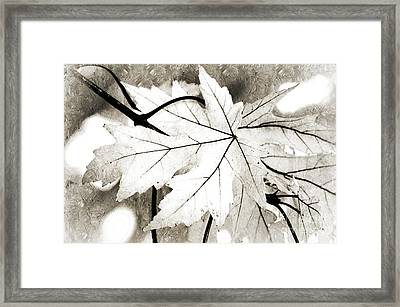 The Mysterious Leaf Abstract Bw Framed Print by Andee Design