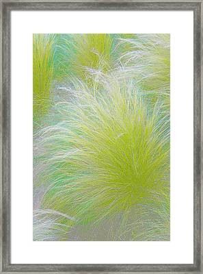 The Nature Of Grass   Framed Print by Ben and Raisa Gertsberg