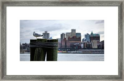 The New Yorker  Framed Print by JC Findley