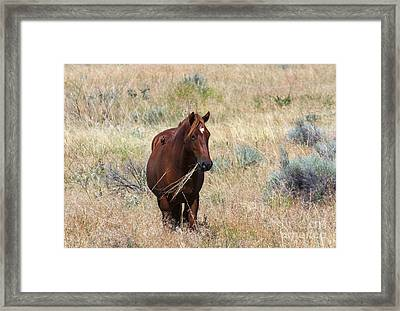 The Odd Couple Framed Print by Mike  Dawson