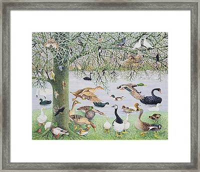 The Odd Duck Acrylic On Canvas Framed Print by Pat Scott