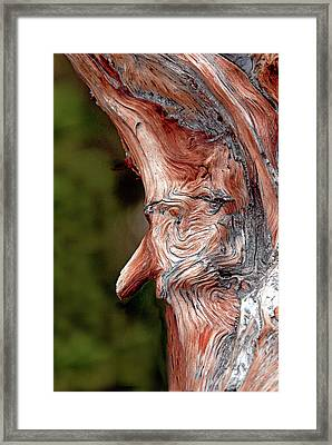 The Old Man In The Tree Framed Print by James Steele