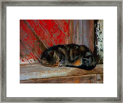 The Old Mill Cat Framed Print by Julie Dant