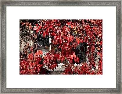 The Old Shed Framed Print by John Edwards