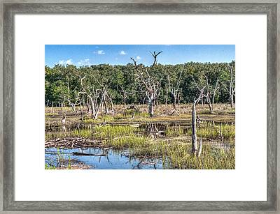 The Old Tree Graveyard Framed Print by Scott Hansen