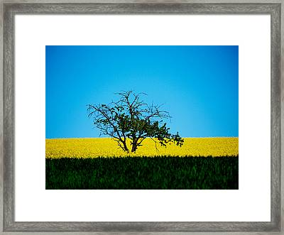 The Old Tree  Framed Print by Jb Atelier