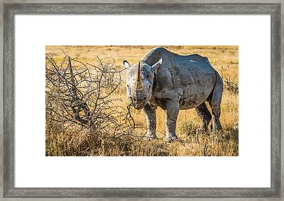 The Old Warrior - Rhinoceros Photograph Framed Print by Duane Miller