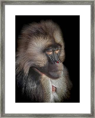 The Old Warrior Framed Print by Paul Neville