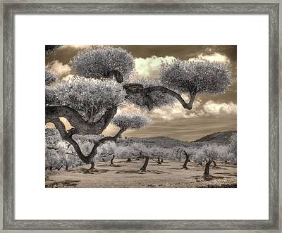 The Olive Grove Framed Print by Jane Linders