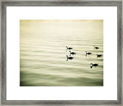 The Pace Of Nature Framed Print by Carolyn Cochrane