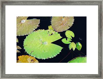 The Pacman Family At The Pond Framed Print by Lynda Dawson-Youngclaus