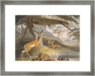 The Pallah, 1804-05 Framed Print by Samuel Daniell