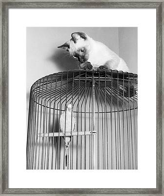 The Parakeet And The Cat Framed Print by Underwood Archives