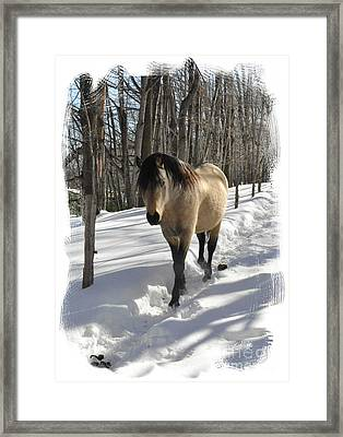 The Paso Fino Stallion Named Brio Framed Print by Patricia Keller