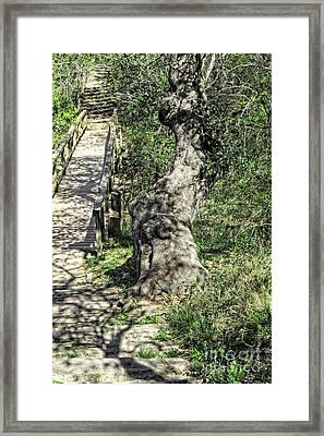 the Passageway Framed Print by Ella Kaye Dickey