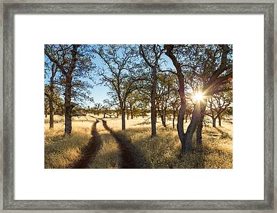 The Path Framed Print by Lee Harland