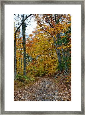 The Path Framed Print by Paul Ward