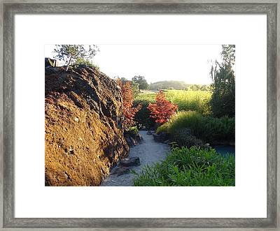 The Path Framed Print by Shawn Marlow