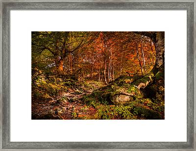 The Path Framed Print by Stefano Termanini
