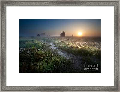 The Path To The Sun Framed Print by Olha Rohulya