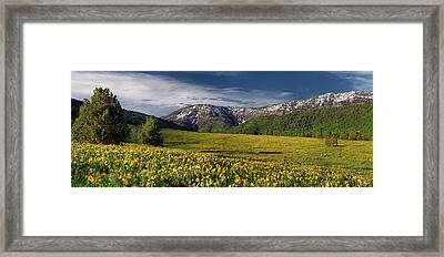 The Perfect Mountain Meadow Framed Print by Leland D Howard