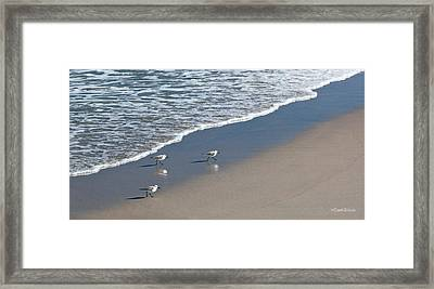 The Pied Sandpiper Framed Print by Michelle Wiarda