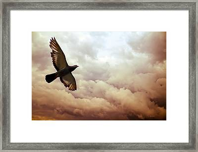 The Pigeon Framed Print by Bob Orsillo