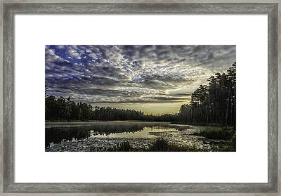 The Pines Framed Print by Louis Dallara