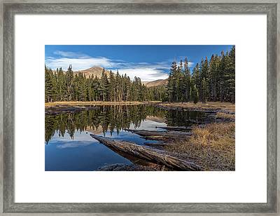The Pond At Dana Meadow Framed Print by Peter Tellone
