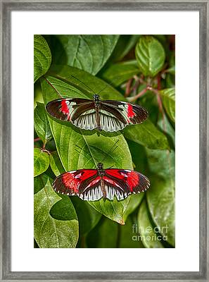 The Postman Always Rings Twice Framed Print by Anne Rodkin