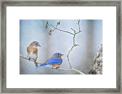 The Presence Of Bluebirds Framed Print by Bonnie Barry