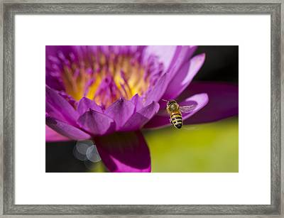 The Promise Of Pollen Framed Print by Priya Ghose
