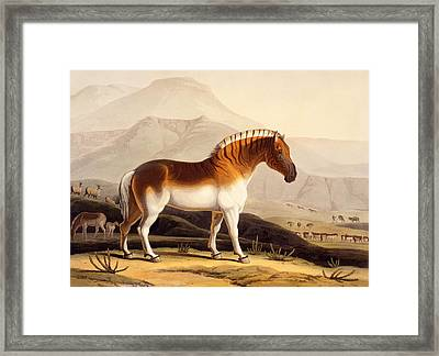 The Quahkah Framed Print by Samuel Daniell