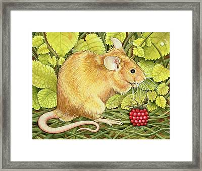 The Raspberry Mouse Framed Print by Ditz