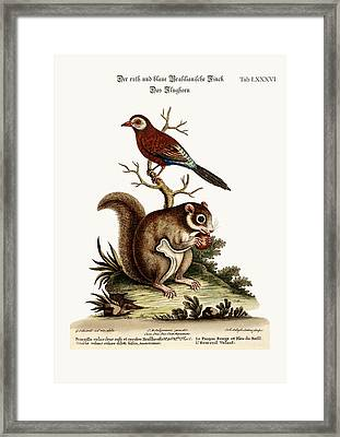 The Red And Blue Brasilian Finch. The Flying Squirrel Framed Print by Splendid Art Prints