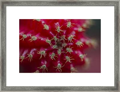 The Red Cactus Cacti Macro Framed Print by David Haskett