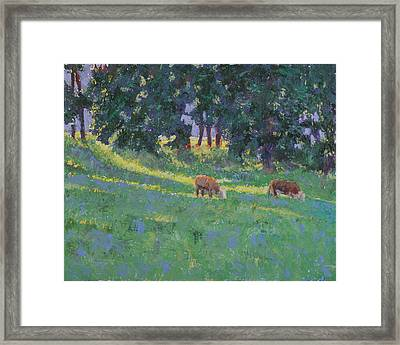 The Red Steers Framed Print by David Zimmerman