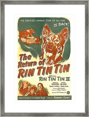 The Return Of Rin Tin Tin, Us Poster Framed Print by Everett