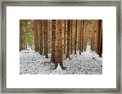 The Road Not Taken Framed Print by EXparte SE