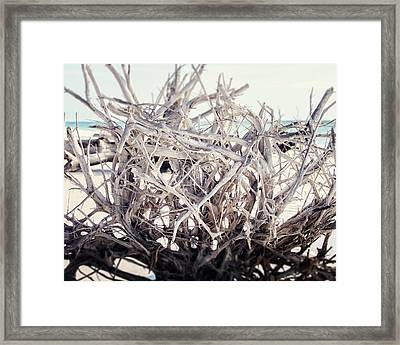 The Roots Framed Print by Lisa Russo